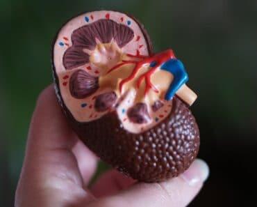 keto effects on kidneys